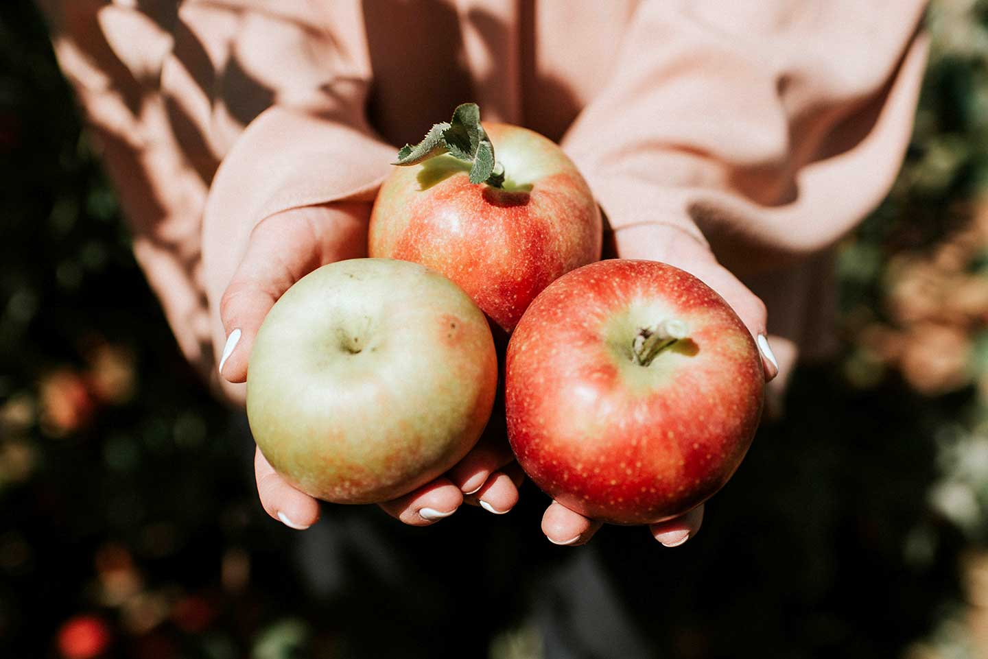 holding.apples